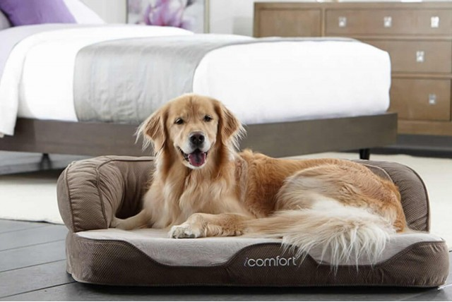5 Reasons to buy a Pet Bed